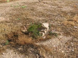 """Ένα από τα καχεκτικά δεντράκια της περίφημης """"ανάπλασης"""" του Δήμου, σκεπασμένο με χαρτοσακούλα"""